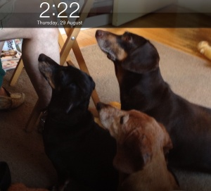 Henry, Ruby and former foster dog Oscar are ever vigilant when Gary is eating. Me, not so much. No joy there. :)